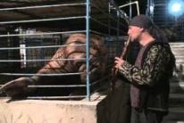 Элизбар играет моржу Самсону. Реакция на флейту