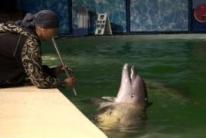 Элизбар, танцующие дельфины и флейта. Ялтинский театр морских животных